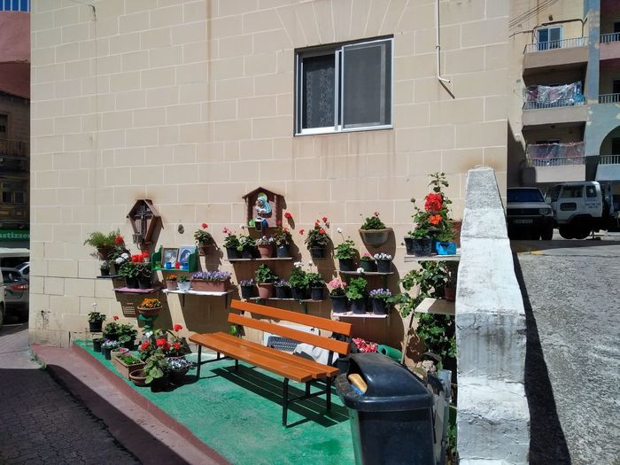 Bench Malta Mediterranean  Mother Mary Park Bench Architecture Building Exterior Built Structure Day Flowering Plant No People Plant Potted Plant Spring Springtime Wall