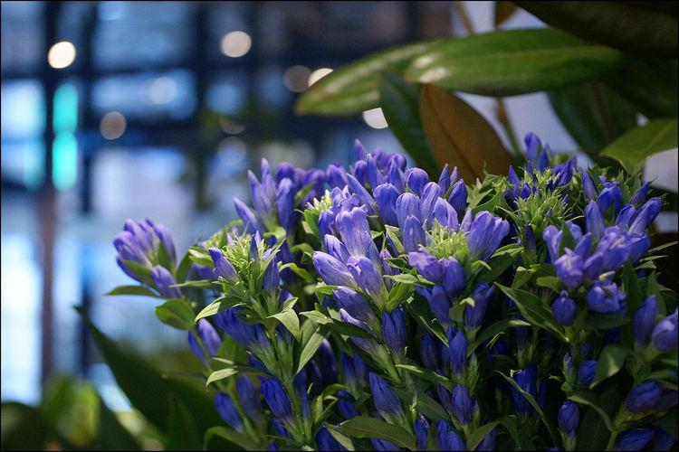따뜻했던... Flowers A700 Plants