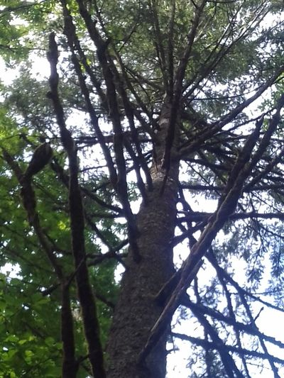 Low Angle View Crazy Branches Trees And Sky Nature No People Outdoors Beauty In Nature Green Color Simple Photography