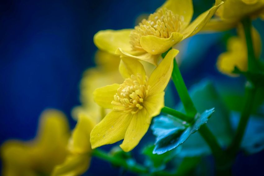 Macro Macro Photography Flowering Plant Flower Plant Growth Fragility Beauty In Nature Vulnerability  Yellow Close-up Petal Flower Head Freshness Inflorescence Nature Focus On Foreground Day No People Pollen Selective Focus