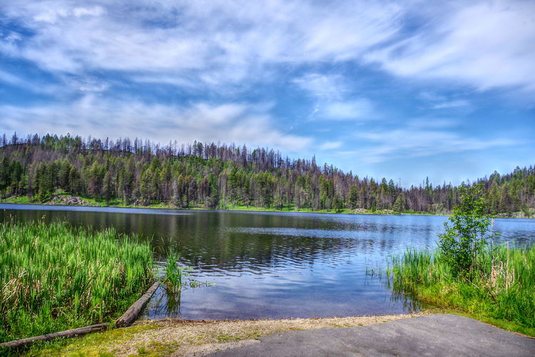 Swan Lake Wa Blue Sky Clouds Cattails Water Reflections Camping Pavement Boat Launch Logs Green HDR Lake Tree Pine Tree Beauty In Nature Water Scenics Outdoors Forest Landscape Nature Summer No People Vacations Sky Mountain Day EyeEmNewHere