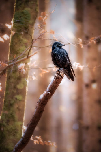 Animal Wildlife Animals In The Wild Animal Focus On Foreground One Animal Animal Themes Bird Perching Day Tree Plant Nature No People Branch Vertebrate Outdoors Close-up Selective Focus Beauty In Nature Sunlight