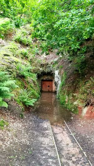 Abandoned mine at Alderley Edge Mine Nature Green Alderley Edge AlderleyEdge Colour Of Life