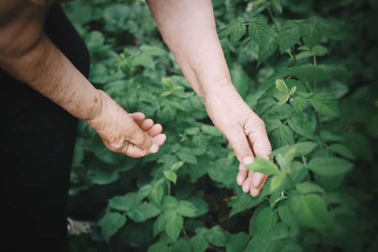 Close-up of hands holding plants