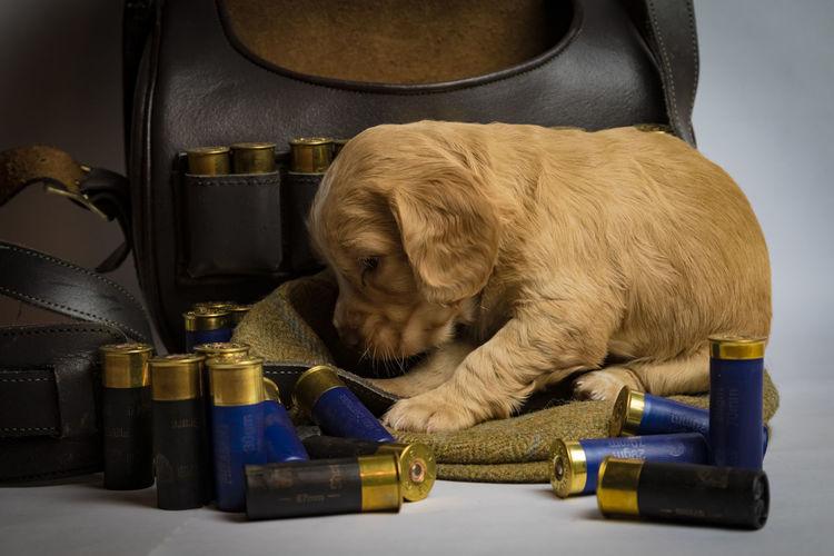 Cute Puppy Indoors