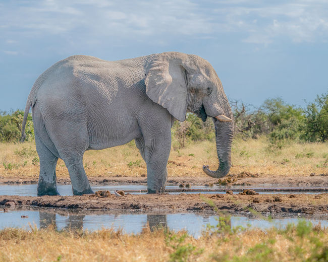 Side view of elephant in lake against sky