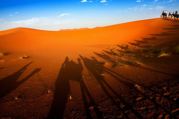 Desert Outdoors Nature Sky Shadow Caravan Camels Travel Destinations Sahara Africa Day Landmark Colorful Culture Tourism Background Sand Dune Mammal Arab Finding New Frontiers Break The Mold
