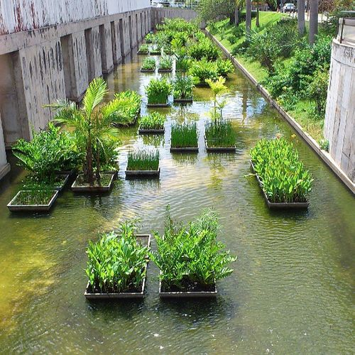 Jardim molhado