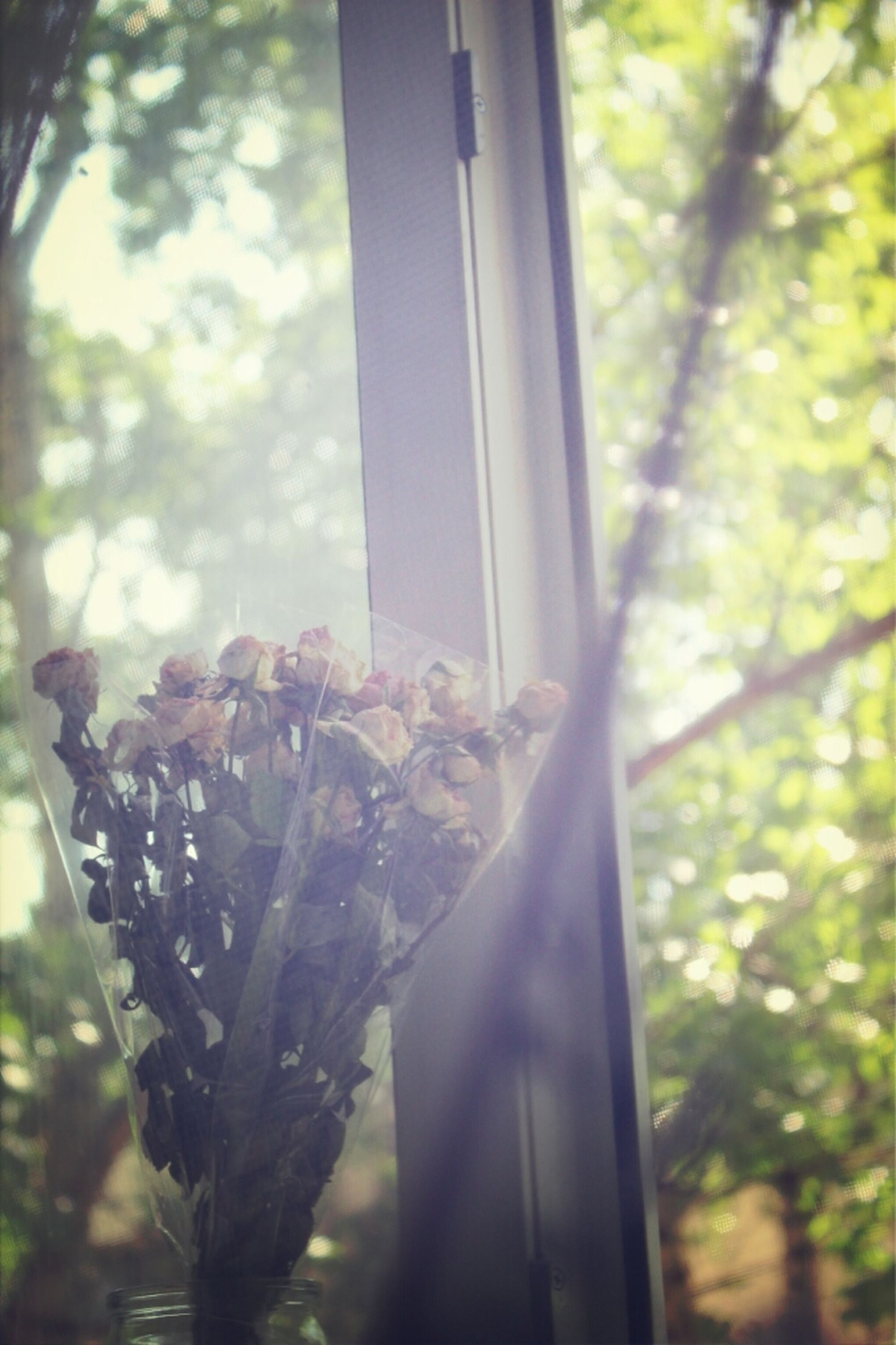 focus on foreground, tree, close-up, window, growth, glass - material, hanging, low angle view, indoors, transparent, day, selective focus, branch, nature, no people, sunlight, plant, leaf, tree trunk