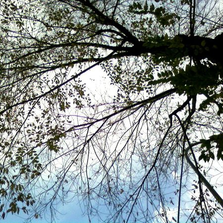 Nature Photography Nature Naturelovers Spring Springtime Branches And Sky Branches Trees Tree Light Sun And Trees Branches And Sun Sun Sunlight Sunlight Through Trees Showcase April