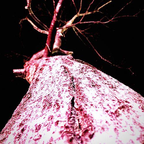 Tree 🌲