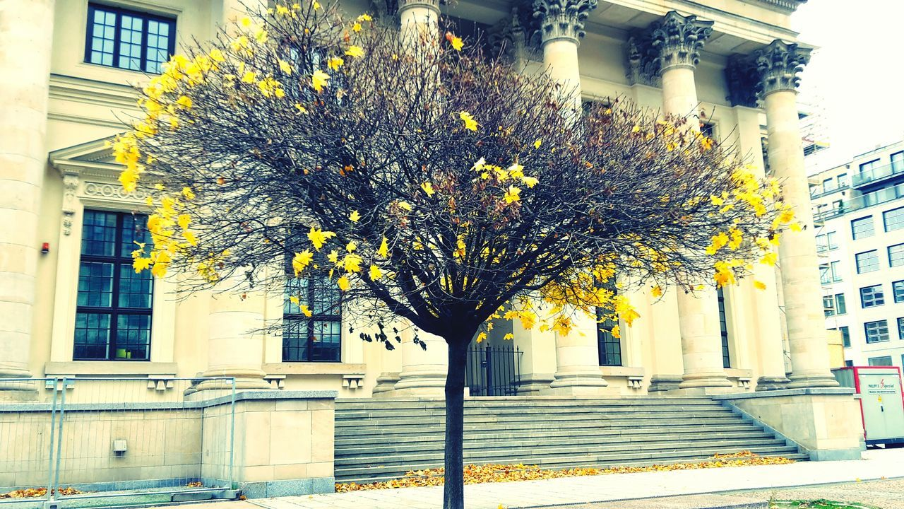 architecture, building exterior, built structure, flower, building, outdoors, no people, growth, day, tree, residential building, branch, city, fragility, nature