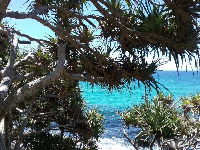 Burleigh Hill Queensland Landscape Commonwealth Games Home Outdooors Holiday Queensland Water Daylight Geography Nature Outdoors Light Summer Sea Scenic Beach Vacation Burleigh Heads Lifestyle Palm Plant