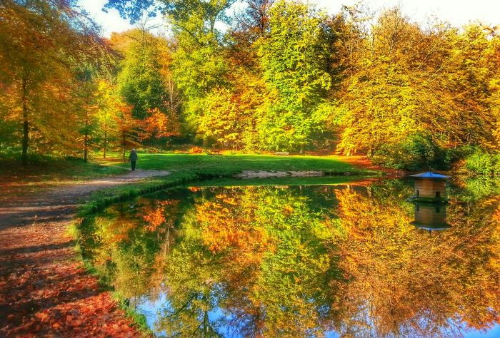 Autumn Colors EyeEm Best Shots - Reflections Nature_collection EyeEm Best Shots - Nature Autumn is such a beauty....