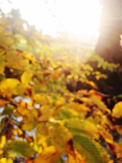 Artistic blur Yellow Sunlight No People Backgrounds Beauty In Nature