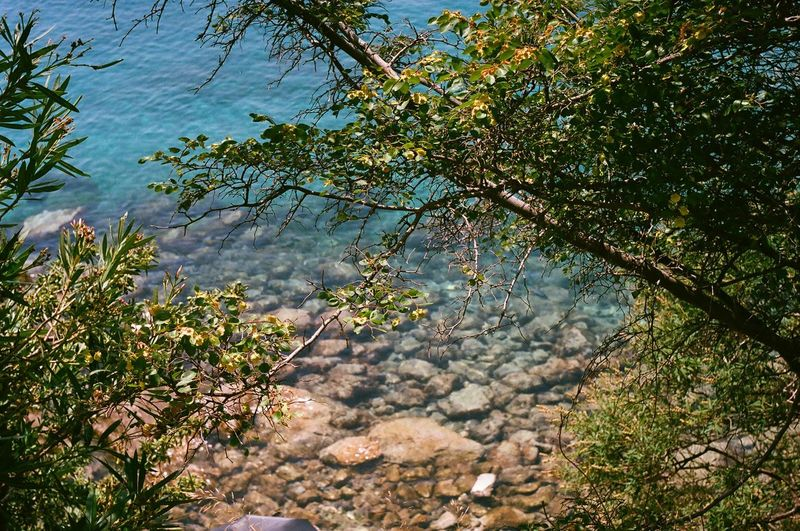 Pisak, Croatia - summertime Tree Nature Beauty In Nature Outdoors Growth Day Water No People Leaf Freshness