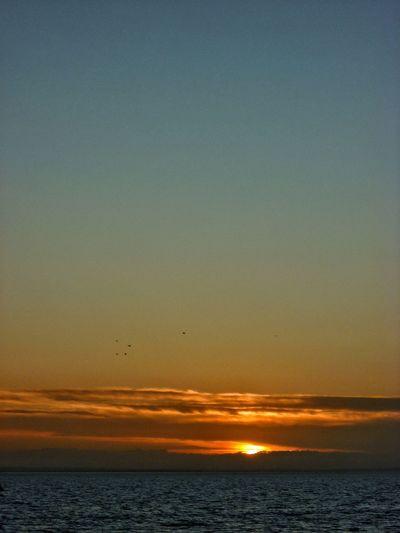 Sunset at sea. Sunset On The Sea Sunsetting On Water Sunsetting Sunset_collection Sun Sunset Sea And Sky Seaside Sea Front Seafront Sun On Water  Sun On The Water Seascape Sea Southend On Sea Southend Sun, Sea, Sky Sea And Sun Southend Seafront Sun On The Sea