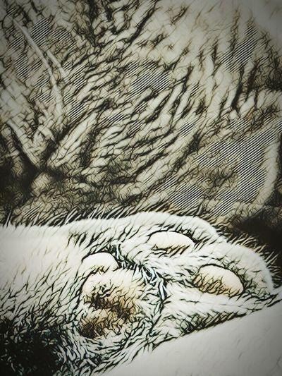 Sleepy Cat Teddybear Purrfect Purr Sleepy Pet Photography  Mycat♥ Cats Cat Lovers Edit Junkie Blackandwhite Pet Photography  Mobilephotography Myview Naptime Close-up Meow Pet Photography  Teddy Bear Cat♡ Catlover Catoftheday Sleepy Cat, Sleepy Time ♥ Sleeping Cat Relaxing Cat