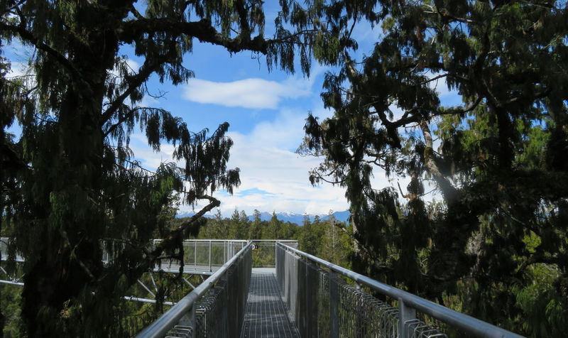 Treetop-Walk Sightseeing Trees Beauty In Nature Bridge - Man Made Structure Footbridge Nature No People Outdoors Railing Scenics Sky Tree Treetop Treetopwalk View From Above