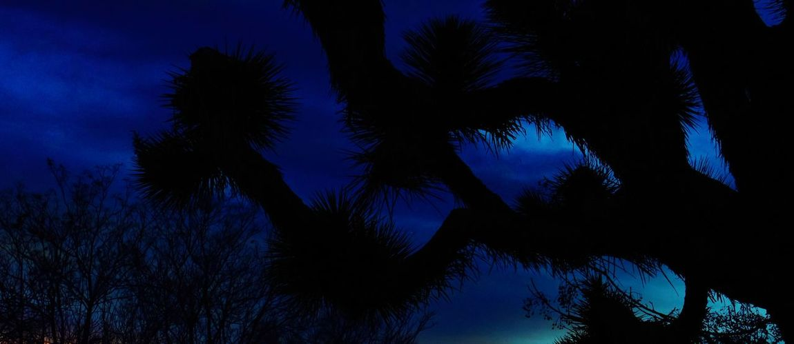 NighT Tree'S... X;D* ... Joshua Trees at ResT, Beauty In Nature Joshua Trees Nature Yucca Plant Tranquility Silhouette Tree No People Blue Nature Night Nikonphotographer Yucca Valley Ca The Week On EyeEm EyeEmNewHere Lost In The Landscape California Love Illuminated YuccaValleyCalifornia, Power In Nature EyeEm Ready   Colour Your Horizn California Dreamin