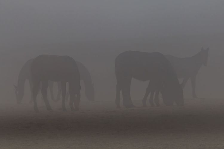 Horses in a foggy day Animal Animal Themes Animals Animals In The Wild Animals In The Wild Beauty In Nature EyeEm Nature Lover Eyem Best Shots Eyem Best Shots Nature_collection Eyemphotography Foggy Foggy Day Foggy Morning Horse Horse Photography  Horses Nature Nature Photography Nature_collection Naturelovers No People Outdoors Scenic Scenics Wildlife Photography