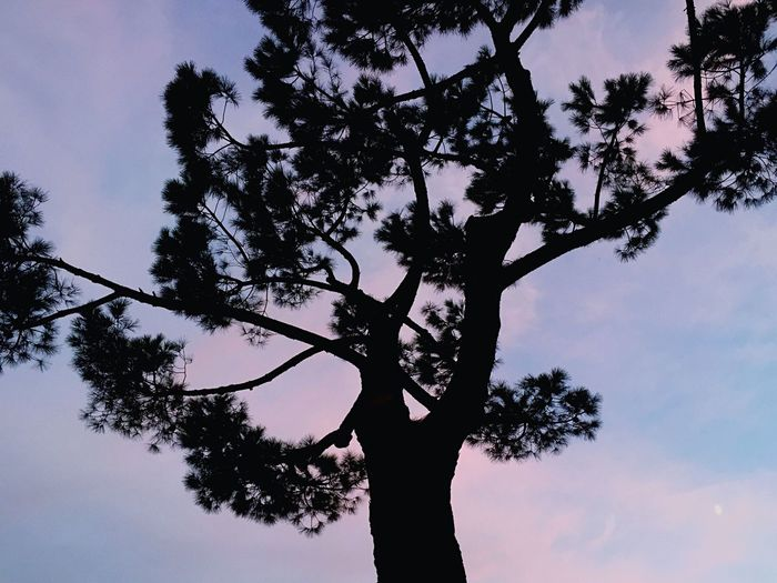 September Pine Sunset Violet Shadow Black Clouds Calm Peace Serenity Sky Beauty