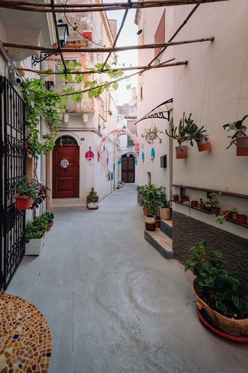 Potted plants on alley amidst buildings