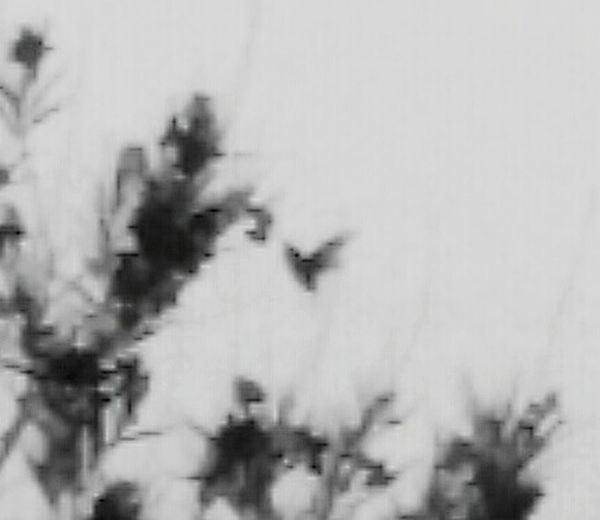 Telling Stories Differently Showing Imperfection Do You See What I See? Hummingbird Black And White This Week On Eyeem Desert Beauty Hello World Good Morning My Point Of View California Check This Out Skyporn Landscape_Collection Sunset #sun #clouds #skylovers #sky #nature #beautifulinnature #naturalbeauty #photography #landscape EyeEm Desertlife Taking Photos Enjoying Life