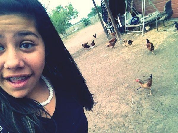 Chickens >.<