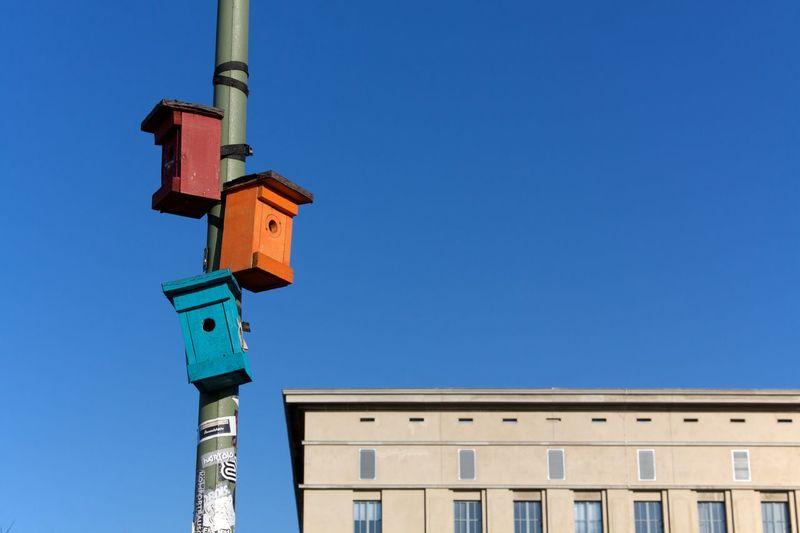 Colorful bird