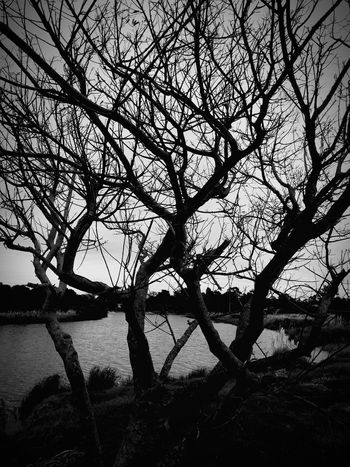 Tree Plant Sky Branch Silhouette No People Water