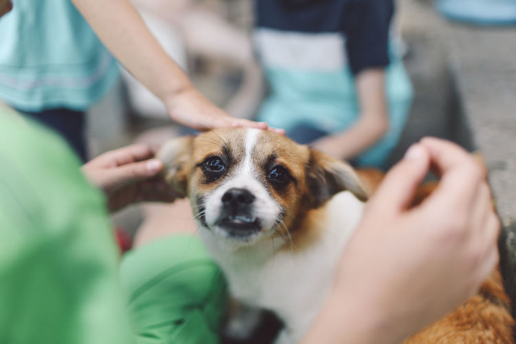 Canine Close-up Cute Day Dog Domestic Animals Focus On Foreground Leisure Activity Lifestyles Mammal Part Of Pet Collar Pet Owner Pets Portrait Puppy Pet Portraits Pet Portraits