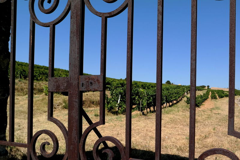 Blue Sky Chateauneufdupape Eye4photography  EyeEm Best Shots EyeEm Gallery EyeEmBestPics Fence France From My Point Of View Gate In A Row Iron Iron - Metal Iron Fence Landscape Landscape_Collection Metal No Entry Old-fashioned Provence The Week On EyeEm Wine Wine Tasting Wineyard