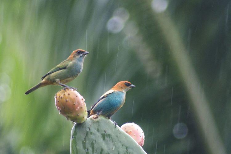 Awesome_nature_shots Streamzoofamily TheVille EyeEm Birds