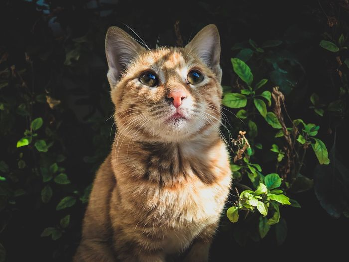 Domestic Cat Pets Domestic Animals Feline Mammal One Animal Animal Themes Leaf Plant Portrait No People Looking At Camera Outdoors Nature Day Close-up