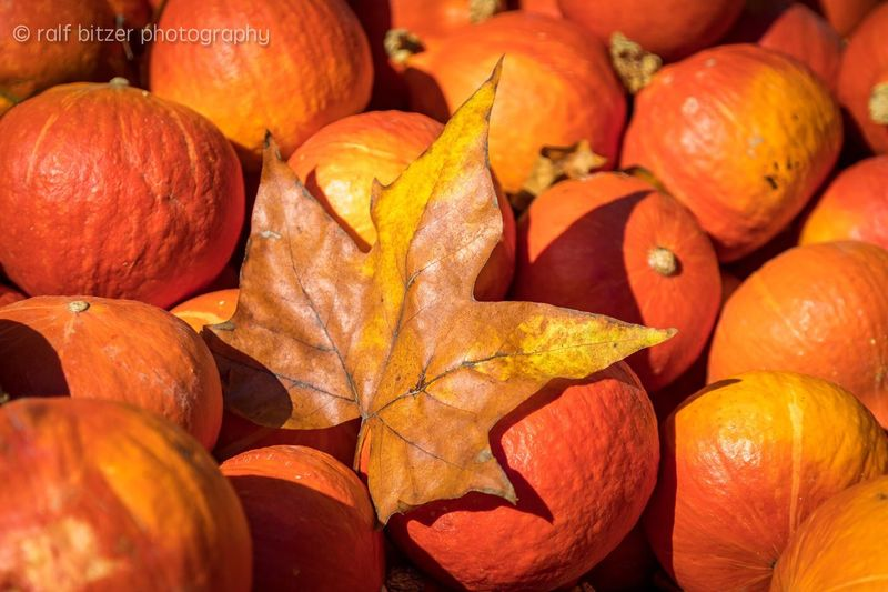 Orange Color Pumpkin Food And Drink Freshness No People Backgrounds Full Frame Large Group Of Objects Healthy Eating Autumn Food Close-up Outdoors Day