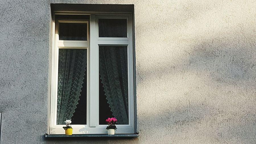 çiçek Penceremden Window Huzur Relaxing Sakin Kendi Nature Wien Window Flower Architecture Day No People Building Exterior Built Structure Indoors