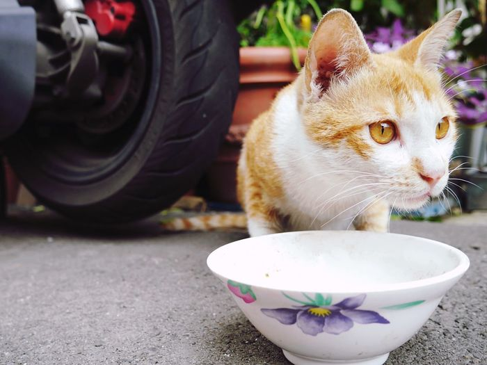 Cat by bowl in lawn