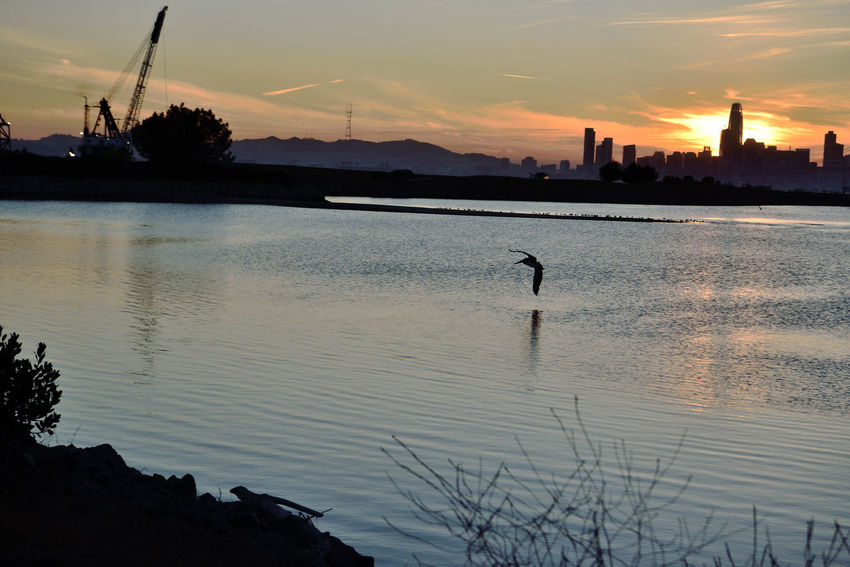 Sunset At Middle Harbor 10 Port Of Oakland, Ca Middle Harbor Sunset Sundown Sunset Silhouettes Sunset_collection Brown Pelican Flying Close To The Water San Francisco Skyline Cityscape Salesforce Building Sutro Tower Dredging Crane Reflections Reflections In The Water San Francisco Bay Estuary Landscape_Collection Landscape Photography Nature Beauty In Nature Nature_collection Birdwatching Silhouette Water Cloud - Sky