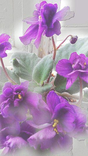 Violet By Motorola