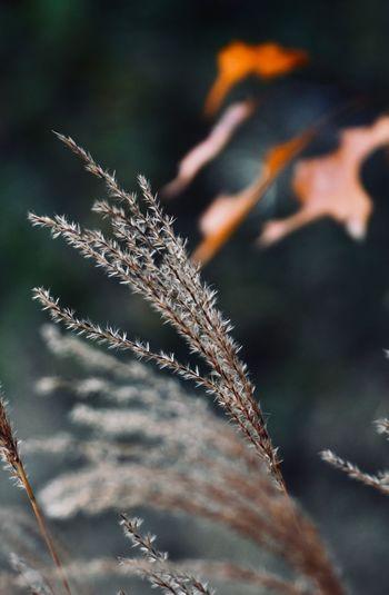 Autumn mood -