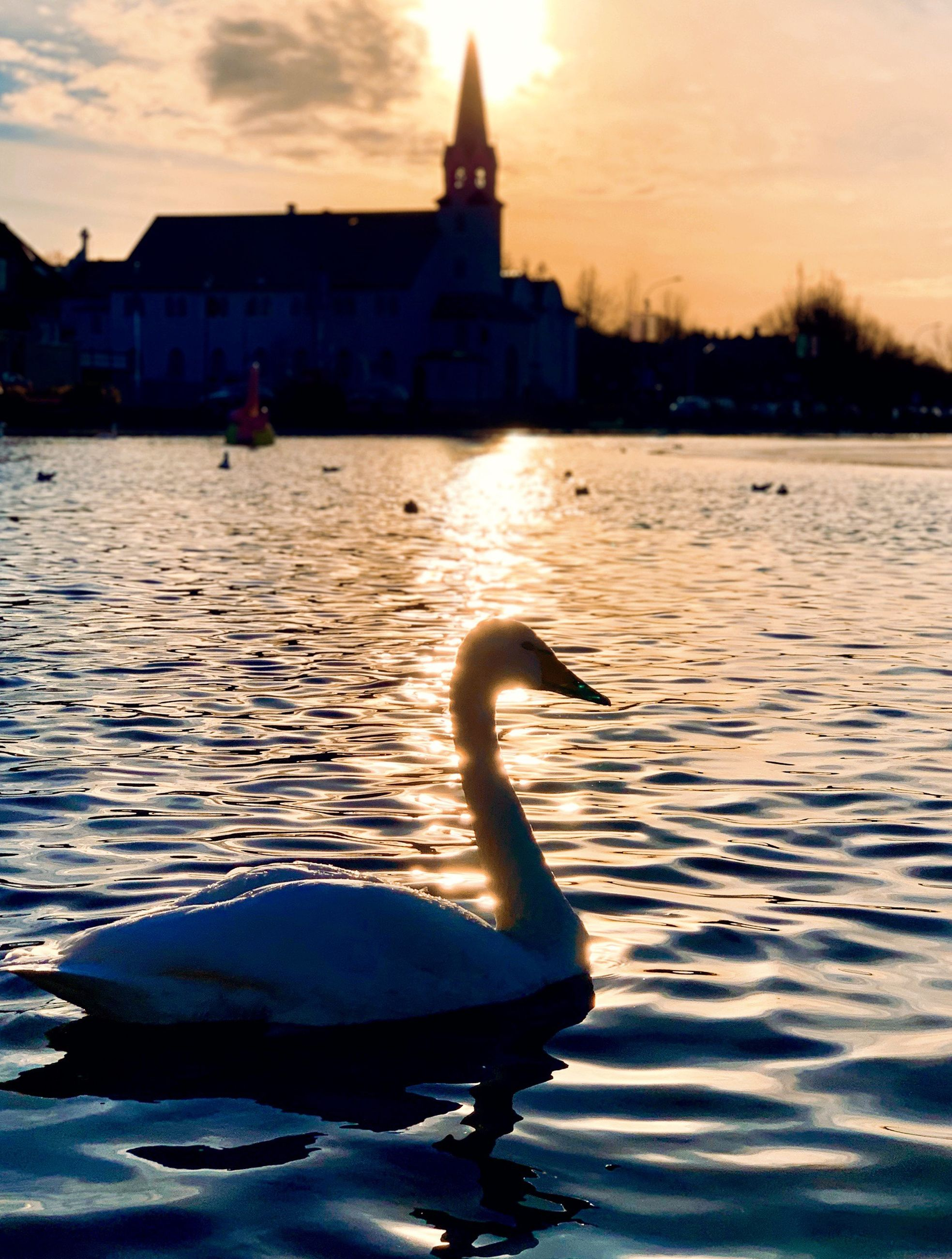 water, sunset, sky, building exterior, architecture, built structure, nature, animal, animal themes, bird, vertebrate, river, reflection, animals in the wild, animal wildlife, waterfront, cloud - sky, swan, outdoors, floating on water
