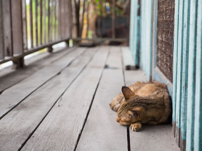 cat in a nap Kitty Relaxing Animal Themes Bestoftheday Close-up Day Domestic Animals Domestic Cat Feline Focus On Foreground Ginger Cat Indoors  Kitten Mammal No People One Animal Pets Relaxation Sleeping Wood - Material