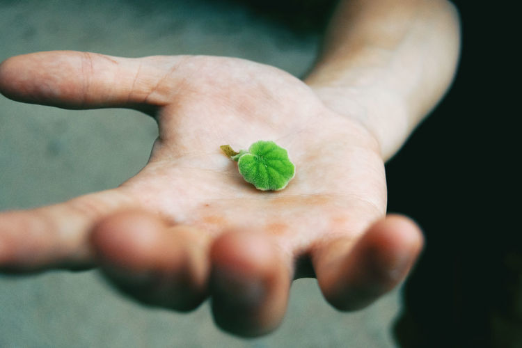 Body Part Care Close-up Finger Food Food And Drink Green Color Hand High Angle View Holding Human Body Part Human Finger Human Hand Human Limb Leaf Lifestyles One Person Plant Plant Part Real People Selective Focus Small