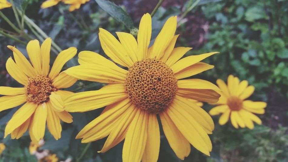 EyeEm Selects Flower Nature Beauty In Nature From My Point Of View