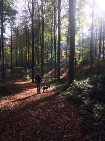 EyeEmNewHere Hallerbos Dog Fall Perspectives On Nature