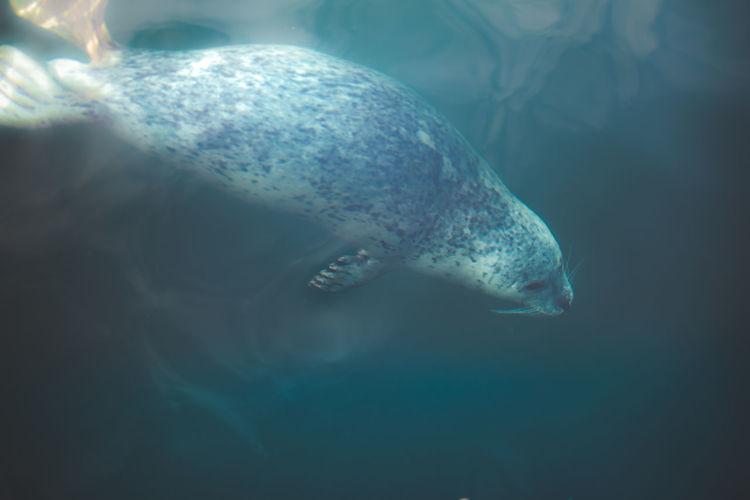 High angle view of aquatic mammal swimming in sea