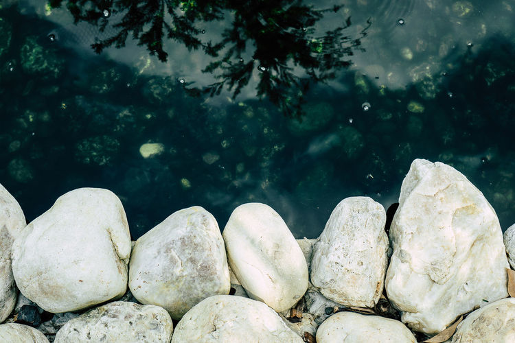 Outdoors Animal Themes Animal Wildlife Marine Pebble Close-up Focus On Foreground Stone - Object Rock - Object No People Rock Solid Stone Nature Water Day Animal Tree Plant Animals In The Wild Stream