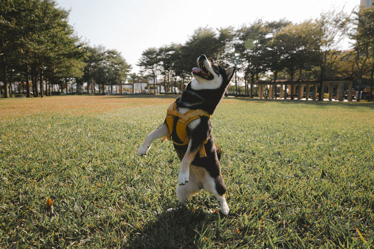 Dog on field in park