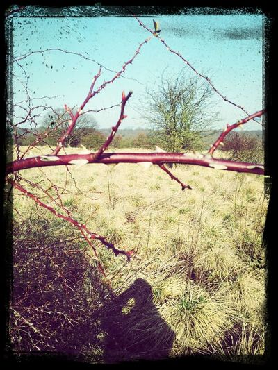 Red Thorn Bush